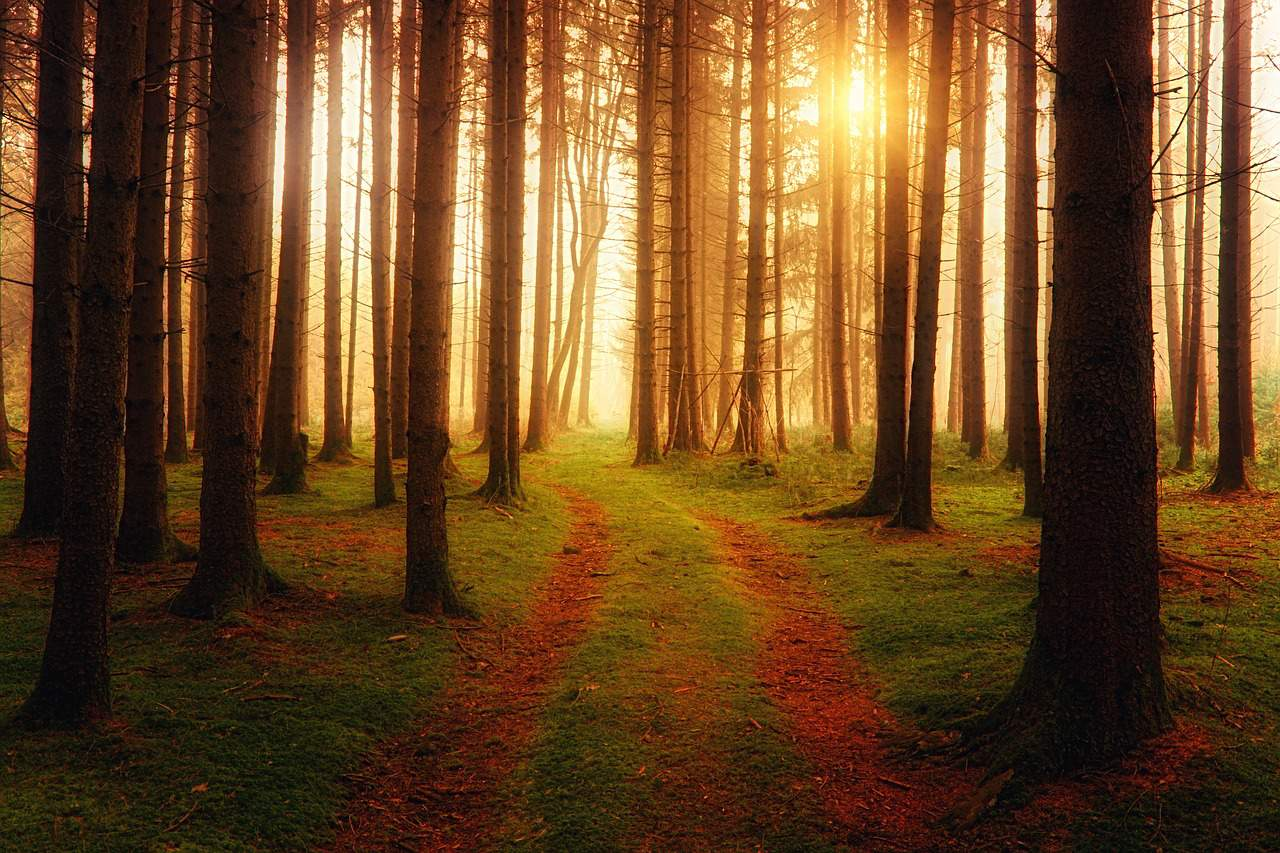 Random Forest Algorithm, A Complete and Super Easy Guide.